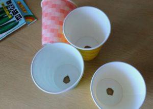 紙コップでキュウリの種まき