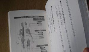 筋トレで鍛えられる筋肉